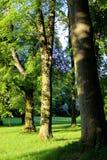 Drzewny zmierzch 005 Zdjęcie Stock
