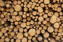 Drzewnych fiszorków tło Obrazy Royalty Free