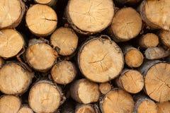 Drzewnych fiszorków tło Zdjęcie Stock