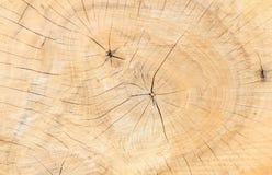 Drzewnych pierścionków tekstury tło Obraz Stock