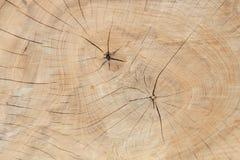 Drzewnych pierścionków tekstury tło Obrazy Royalty Free