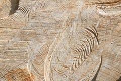 Drzewnych pierścionków tekstury tło Fotografia Stock