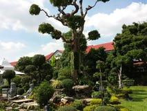 Drzewo, świątynia, Tajlandia, budha, podróż, cisza Zdjęcie Royalty Free
