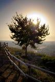 Drzewo światło fotografia royalty free
