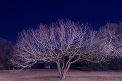 drzewo świeciło Obrazy Stock