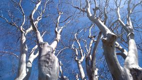 Drzewo żadny liście fotografia royalty free