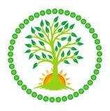 Drzewo życie i powstający słońce w centrum mandala wektor ilustracji