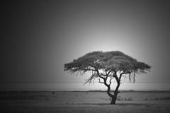 Drzewo życie i wiek - Abstrakcjonistyczny natury tło Fotografia Royalty Free