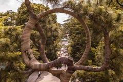 Drzewo życie w ueno parku który pokazuje ci ścieżkę fotografia royalty free