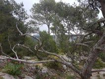 Drzewo zdjęcia royalty free