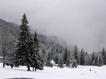 drzewo. Zdjęcie Stock