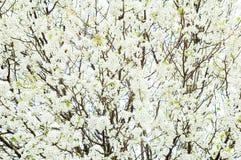 drzewo zdjęcie royalty free