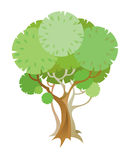 drzewo Obraz Royalty Free
