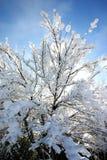 drzewo. Zdjęcie Royalty Free