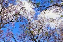 01 drzewo Zdjęcie Royalty Free