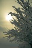 drzewo. Obraz Royalty Free