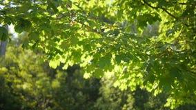 Drzewo zdjęcie wideo