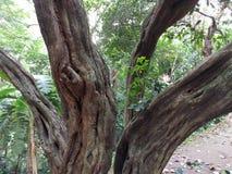 02 drzewo Zdjęcia Royalty Free