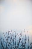 Drzewo Zdjęcie Stock