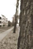 drzewo fotografia royalty free