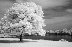 drzewo Zdjęcia Stock