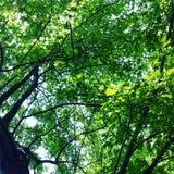 Drzewo obrazy royalty free