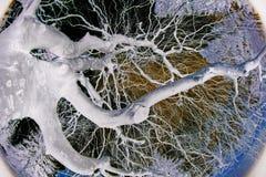 drzewo abstrakcyjne Zdjęcie Royalty Free