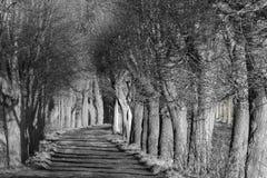 Drzewo aleja przy zmierzchem obrazy stock