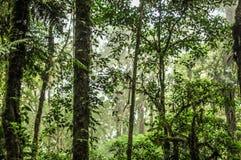 Drzewo bagażniki w dżungli fotografia stock