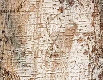 Drzewo barkentyna Obrazy Royalty Free