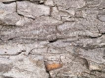 Drzewo barkentyna Zdjęcia Royalty Free