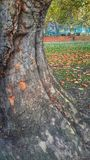 Drzewo baza Fotografia Stock