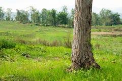 Drzewo baza z zieloną trawą, kopii przestrzeń zdjęcia royalty free