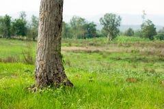 Drzewo baza z zieloną trawą, kopii przestrzeń obraz royalty free