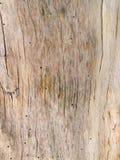 Drzewo bez barkentyny Zdjęcia Royalty Free