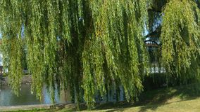 Drzewo bez jaźń szacuneku Zdjęcia Stock