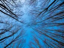 Drzewo bez liści Góry zdjęcia stock