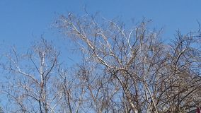 Drzewo bez liści Fotografia Stock