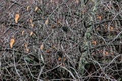 Drzewo bez liści Fotografia Royalty Free