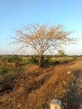 Drzewo bez liści Zdjęcia Royalty Free