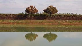 drzewo bliźniak Fotografia Stock