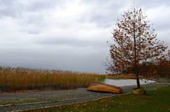Drzewo blisko jeziora Obraz Royalty Free