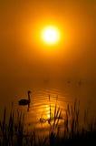 Drzewo blisko jeziora na wschodzie słońca Obraz Stock