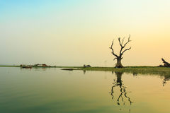 Drzewo blisko rzeki w zmierzchu czasie Fotografia Royalty Free