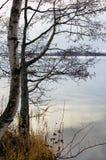 Drzewo blisko wody Obrazy Royalty Free