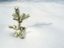 drzewo bożego narodzenie samotnie Zdjęcia Royalty Free