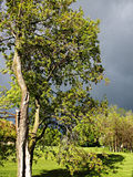 drzewo bright fotografia stock