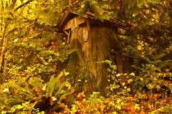 Drzewo Cedrowy Dom Zdjęcia Stock