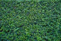 Drzewo ściana Obraz Royalty Free
