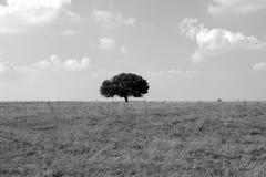 drzewo ciszy royalty ilustracja